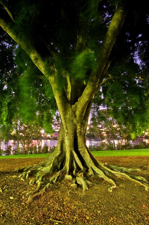 tree_hdr4_sm