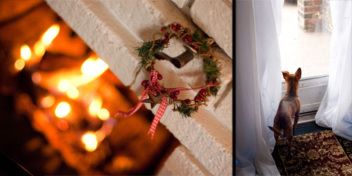 jill_wedding_christmas_dog