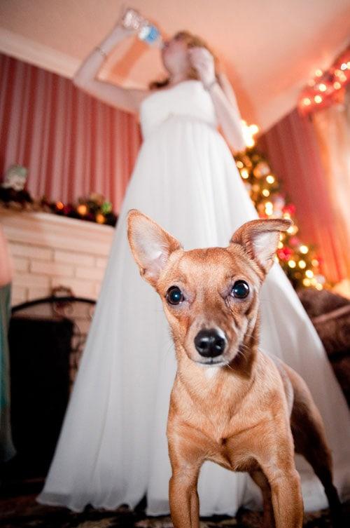 jill_wedding_dog