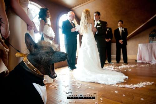 konzelmann_winery_niagara_wedding_12