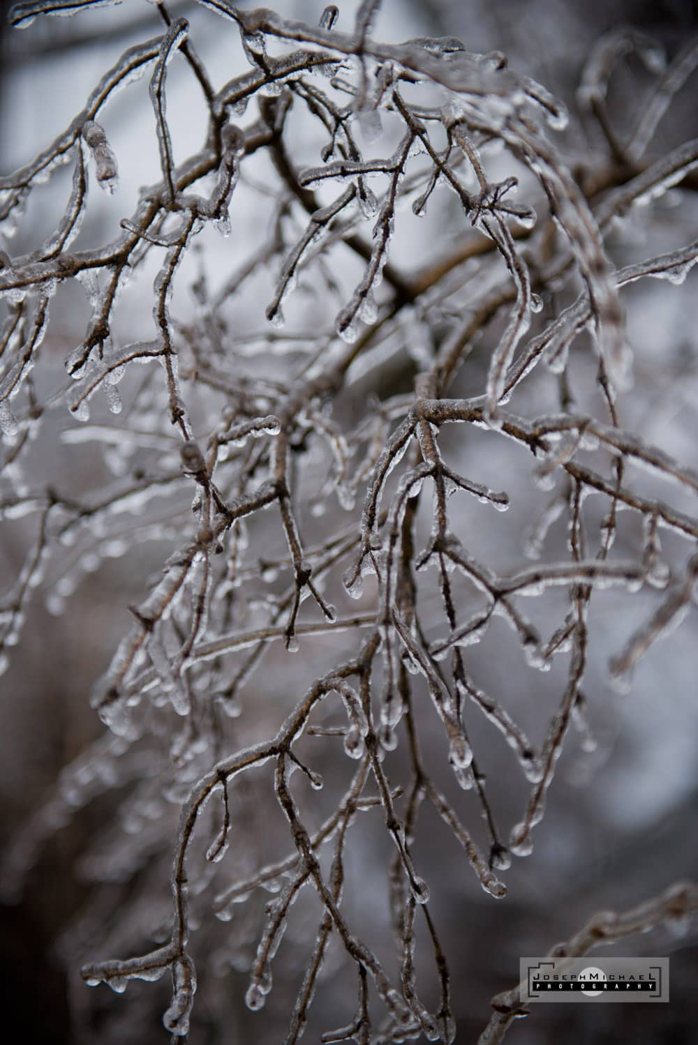 Toronto Ice Storm Photos December 21 2013