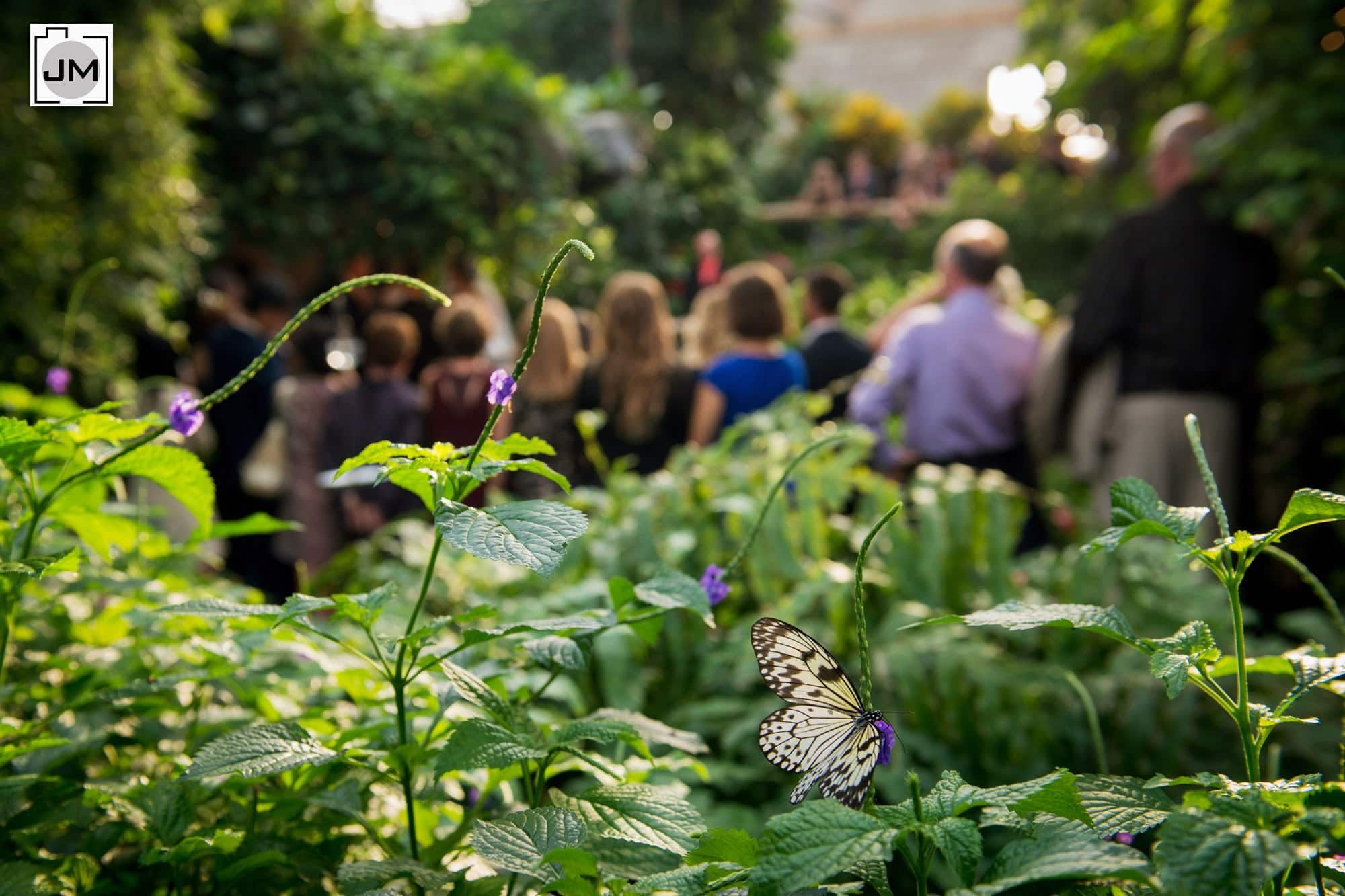 Cambridge_Butterfly_Conservatory_Wedding_016